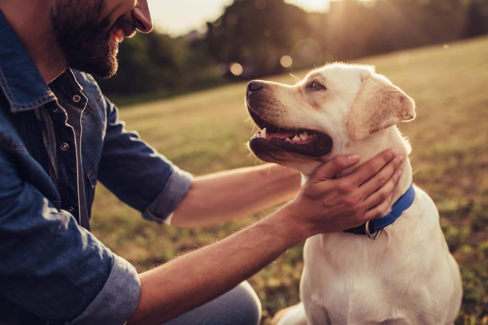 El abandono de mascotas ya es un problema social